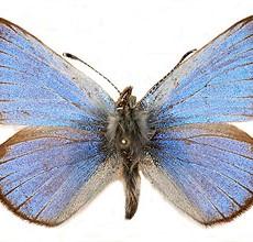 Lepidopterists Aggregation – January 27, 2018