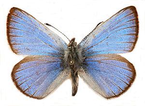 Lepidopterists Aggregation – January 30, 2016
